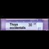 Boiron Thuya occidentalis Туя оксиденталис 30 СН