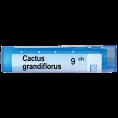 Boiron Cactus grandiflorus Кактус грандифлорус 9 СН