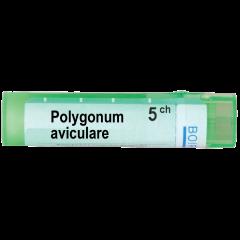 Boiron Polygonum aviculare Полигонум авикуларе 5 СН