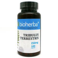 Bioherba Трибулус Терестрис 250 мг х 100 капсули